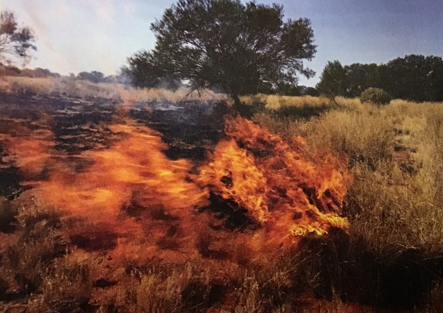 Australia+Bush+Fires