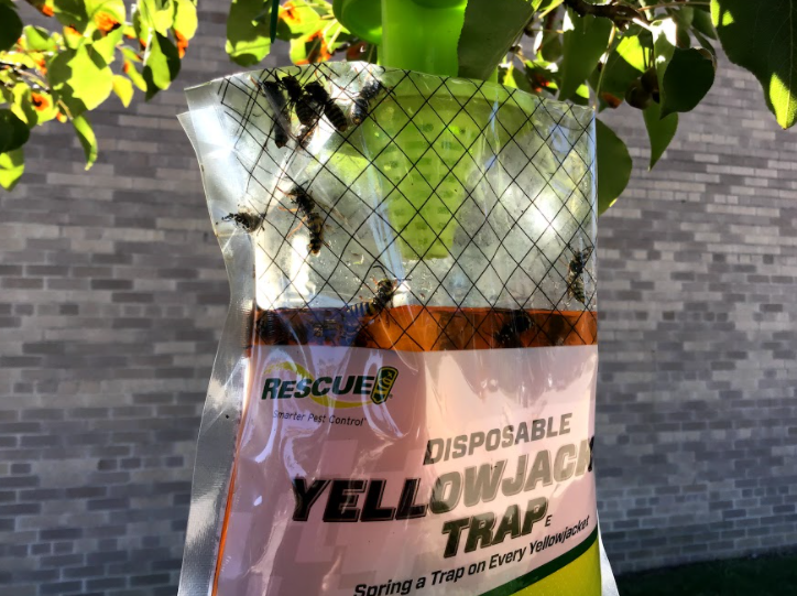 West Middle School has set up bee attractors to control the bee problem at lunch.